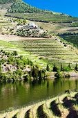 vineyard in Douro Valley, Portugal