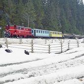 Постер, плакат: Узкоколейная двигателя локомотива на деревянных железной дороге Вишеу де Сус Румыния