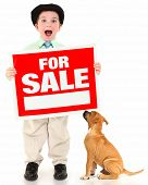 Adorable 3 year old american boy and boxer with red and white for sale sign.  Boy yelling out over w