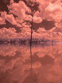 Infrared Fine Art Photography Landscape : Surreal Infrared Art Photography poster