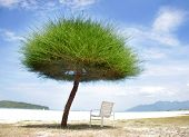 green grass umbrella and chair on beach