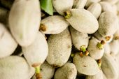Soft Organic Almonds Are Raw, Fresh And Fuzzy poster