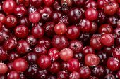 A Lot Of Fresh Cranberries Are Scattered As A Background. Place For Text. Vitamin Berry For Winter poster