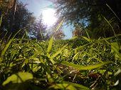 Nice Sun & Nice Grass & Nice Trees & Nice Peace poster