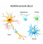 Cells Of Humans Brain. Neuron And Glial Cells (microglia, Astrocyte And Oligodendrocyte). poster