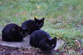 Three Homeless Little Black Cats Sit On Street And Freeze poster