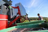 Harvesting Grapes / Harvesting Grapes By A Combine Harvester poster