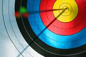 stock photo of archery  - Bull - JPG