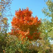 Trees in vibrant autumn colores against a blue sky