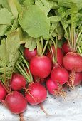 Fresh Pink-red Colored Round Radish Heap Collected From A Organic Garden. Its Scientifically Known A poster
