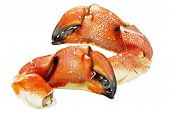 stock photo of cooked crab  - Pacific Rock Crab Claws isolated on white background - JPG