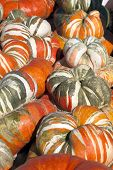 Stripped Autumn Gourds