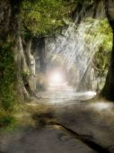 stock photo of fairy-tale  - A beautiful and magical background with a forest and light rays.