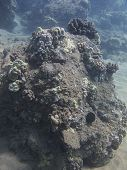 picture of off-shore  - coral reef in the pacific ocean off the shore of Hawaii - JPG