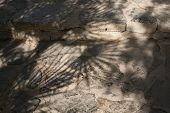 pic of humiliation  - Shadow of fan palms Chamaerops humilis on authentic natural stone floor outdoors - JPG