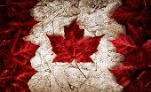 picture of canada maple leaf  - The image of the flag of Canada constructed entirely out of genuine maple leaves from species native to that country. Laid out on top of worn out particle board.