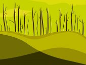 picture of swamps  - Dead trees in the swamp - JPG