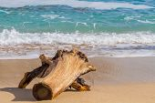 foto of driftwood  - Driftwood on the beach - JPG