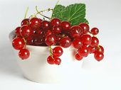 Summer Fruits: Redcurrant poster