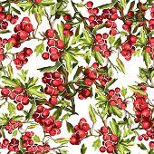 stock photo of backround  - beautiful seamless pattern of rowan on a white backround - JPG