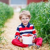 stock photo of strawberry blonde  - Little kid boy in glasses picking and eating red ripe strawberries on organic pick a berry farm in summer on warm day - JPG