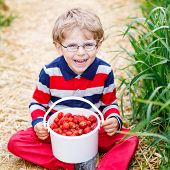 stock photo of strawberry blonde  - Little child in glasses picking and eating red ripe strawberries on organic pick a berry farm in summer on warm day - JPG