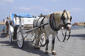 Horse Cart For Tourists In Xania, Crete poster