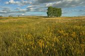 Summer landscape with field, tree, sky and clouds poster