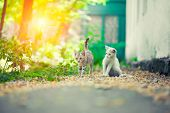 foto of tame  - Two young kittens playing together outdoors at sunset - JPG