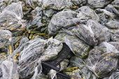 pic of landfills  - Rotten cucumbers in plastic sacks on the landfill - JPG