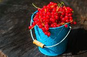 stock photo of bucket  - Red currant fruit in a bucket in the summer rain on wooden - JPG