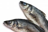 picture of bass fish  - Some Sea bass fish on withe background - JPG