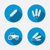 stock photo of wheat-free  - Agricultural icons - JPG