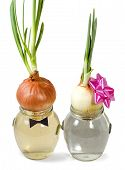 stock photo of friendship belt  - two onions in a glass jar with water on an isolated white background - JPG