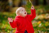 image of crawling  - Cheerful baby in a red dress playing with yellow leaves - JPG