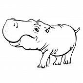 pic of hippopotamus  - Cartoon Hippopotamus Isolated on White Background - JPG