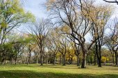 Canopy Of American Elms In Central Park poster