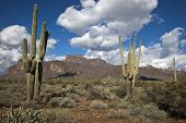 picture of superstition mountains  - The Superstition Mountains with various cacti and puffy clouds after light dusting of snow