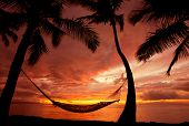 Beautiful Vacation Sunset, Hammock Silhouette with Palm Trees, Maui, Hawaii