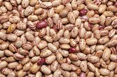 stock photo of phaseolus  - Pinto beans  - JPG