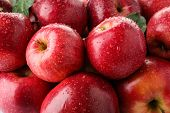 Many Ripe Juicy Red Apples Covered With Water Drops As Background poster