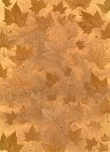 foto of fall leaves  - Autumn background illustration made with platanus leaves - JPG