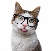 Funny Tabby Cat In Nerd Glasses Put Out His Tongue. Isolated On White Background. poster
