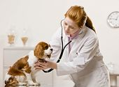 Serious veterinarian examining dog and listening with stethoscope during checkup