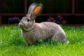 pic of thumper  - bunny eating grass from bright green pasture - JPG