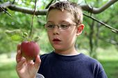 Cute Boy Looking At A Freshly Picked Apple