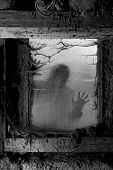 picture of cobweb  - Photo of a zombie outside a window that is covered with spiderwebs and filth - JPG