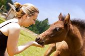 stock photo of fillies  - a pretty woman is feeding an filly - JPG