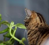 picture of festering  - Tabby cat and flower on the window - JPG