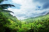 foto of tropical rainforest  - jungle of seychelles island - JPG